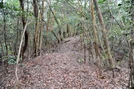 瓶割山(長光寺山)岩倉山峠道ルート - 自然な尾根道
