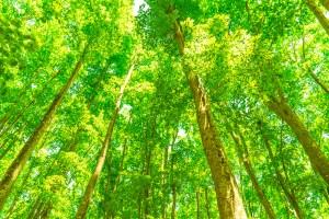無垢材と無垢フローリング種類と樹種について