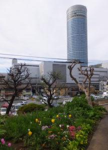加藤さんの庭付近から眺める新横浜の高層ビル。都会の喧騒を忘れさせてくれる(2017年4月18日)