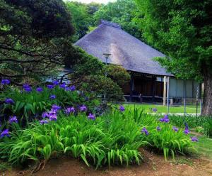 新羽町の西方寺庭園。茅葺きの本堂と四季の花や植物を楽しめる。「長い参道と古木と自然、茅葺きの本堂と四季の花々が咲きます」とのこと(同Twitterより)