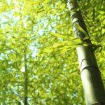 竹のカスケード利用で健康・環境に優しい素材が誕生 大学発の注目研究