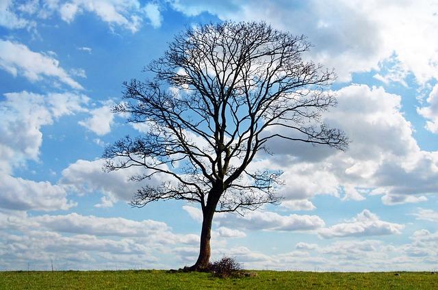 空と一本の木