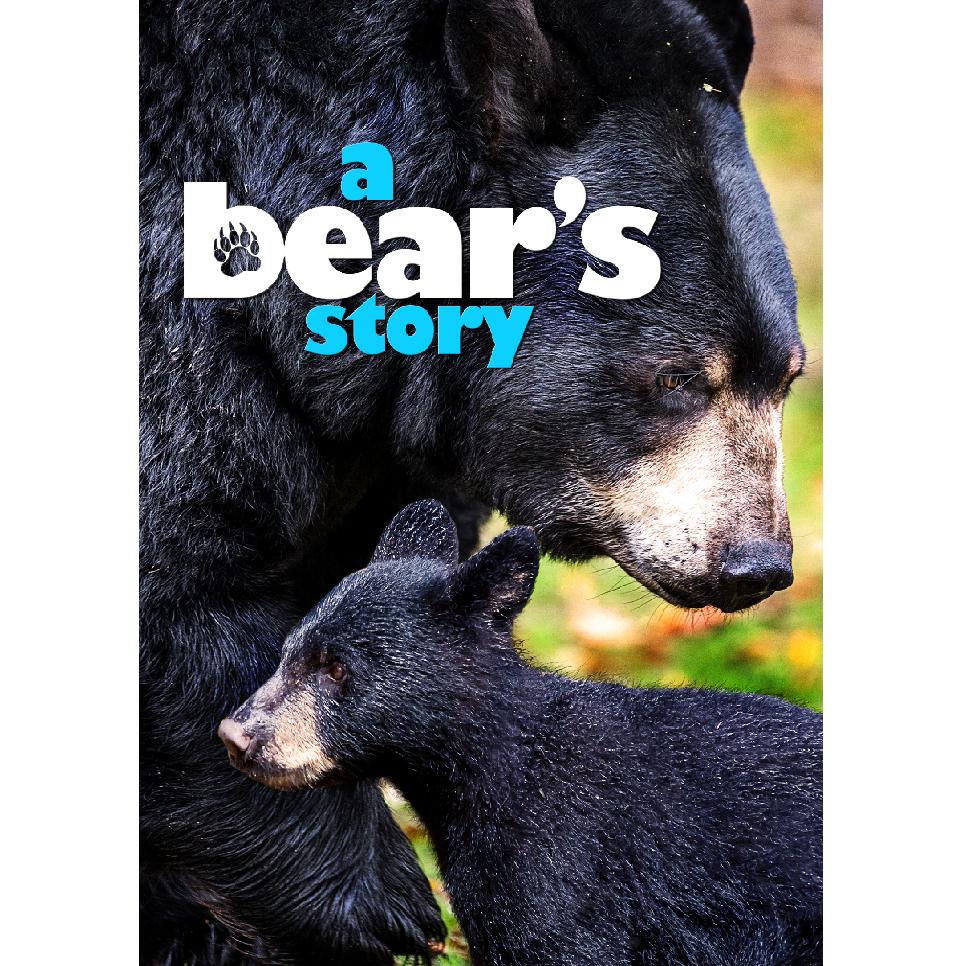 A Bears Story Keyart