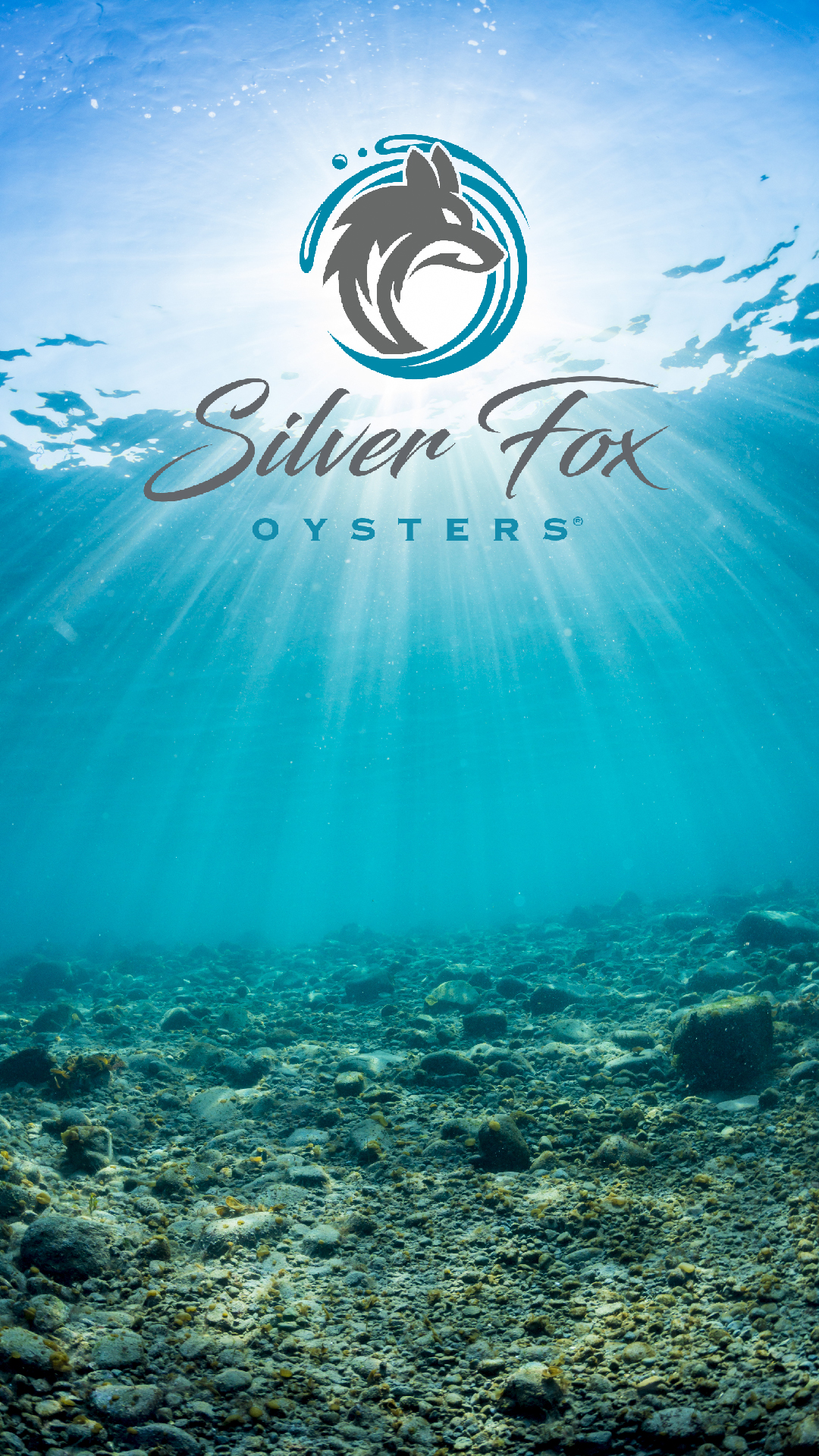 Silver Fox Oysters Ad