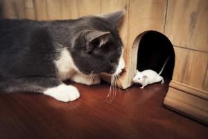 Cat-Mouse