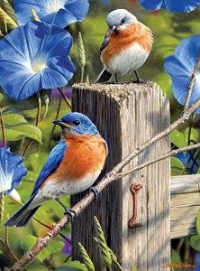 BlueBird on a Gate