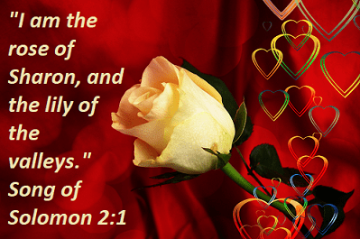 "Song of Solomon 2:1 ""I am the rose of Sharon, and the lily of the valleys."""