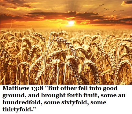 """Matthew 13:8 """"But other fell into good ground, and brought forth fruit, some an hundredfold, some sixtyfold, some thirtyfold."""""""