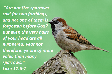 "Luke 12:6-7 ""Are not five sparrows sold for two farthings, and not one of them is forgotten before God? But even the very hairs of your head are all numbered. Fear not therefore: ye are of more value than many sparrows."""