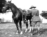 Training a horse to gunfire and to provide cover for a trooper-rider.