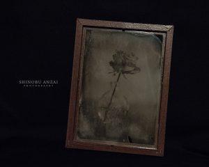Shinobu ANZAI   Photography