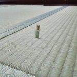 福島区大開にあります「厚生年金住宅」にお住いのお客様宅の畳の新調入替えPart2