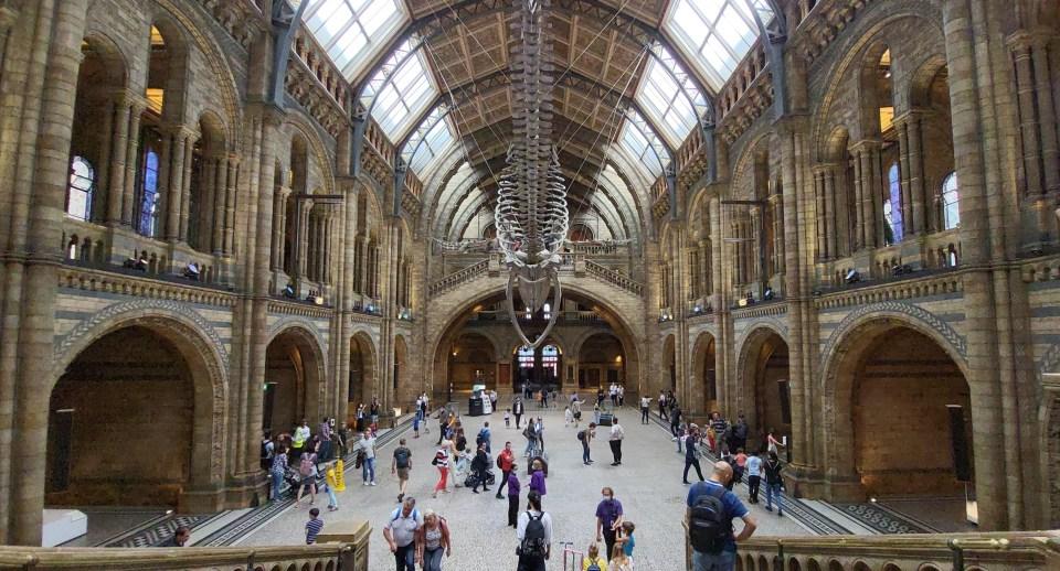 런던 자연사 박물관의 힌츠 홀.