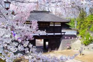 小諸城址懐古園桜まつり