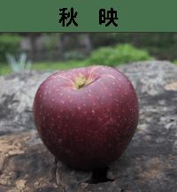 秋映|りんご|減農薬|通販