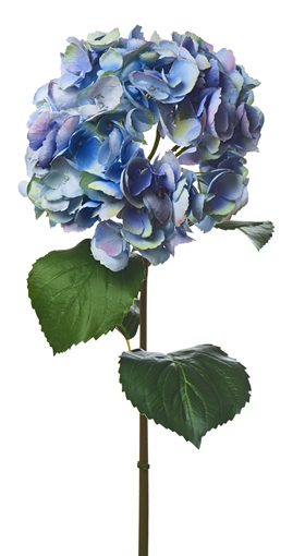 Neptune Hydrangea Blue