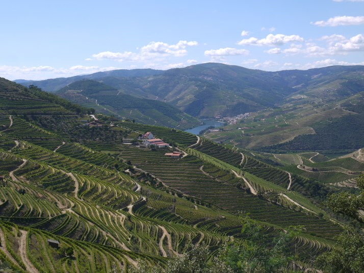 Douro and vines