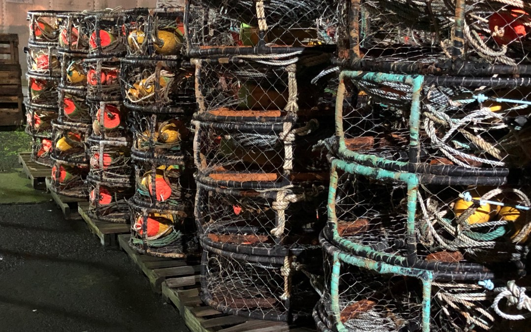 Commercial Dungeness crab season delay continues