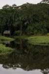 jungle-reflections_amazon