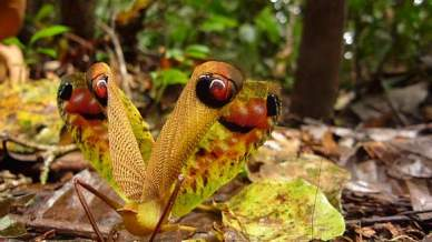 The colors and shapes of insects in the Yasuni Biosphere Reserve would blow your mind.