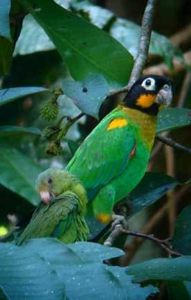 The Birds Living in the Amazon Rainforest