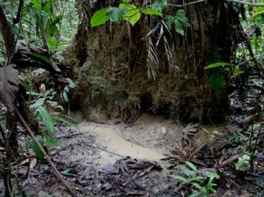 Shiripuno Lodge - Peccary Pit Hole in the Yasuni Biosphere Reserve.
