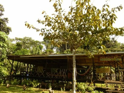 Shiripuno Lodge - Low impact dinning room and hammocks lounge.