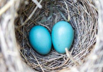 Fertility for Marriage Part 1