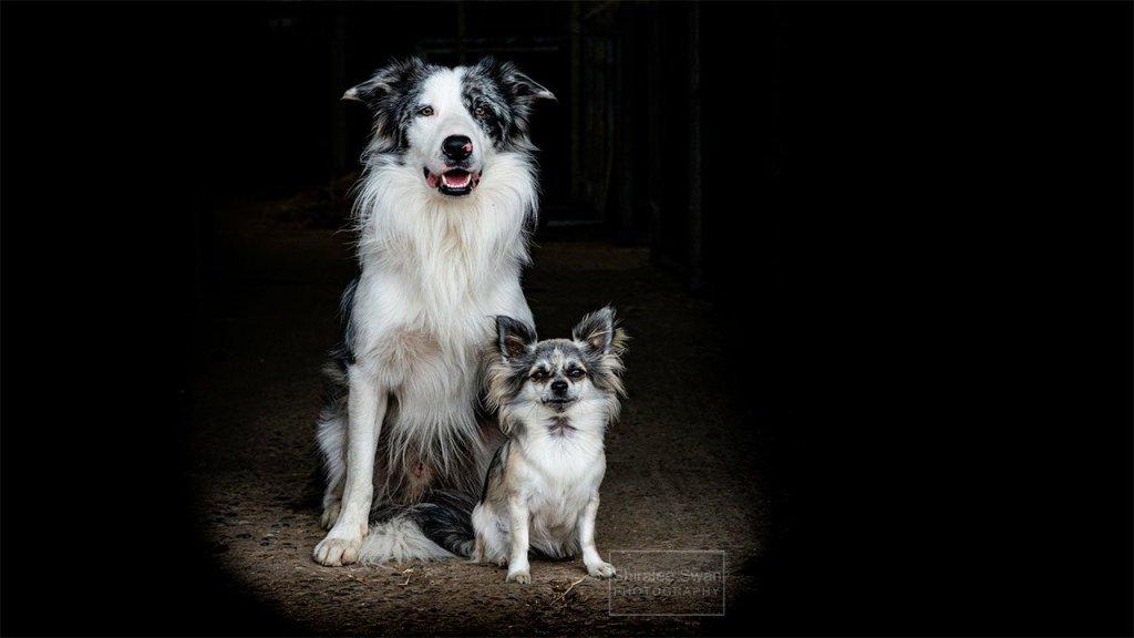 Dog portrait by Shiralee