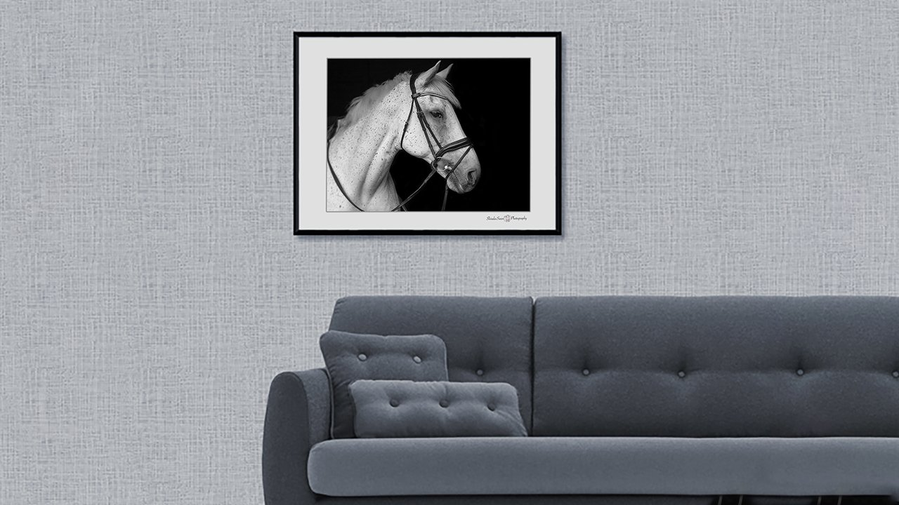 Equine Wall Art by Shiralee Swan