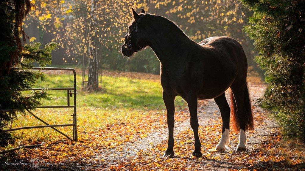 Model pony call