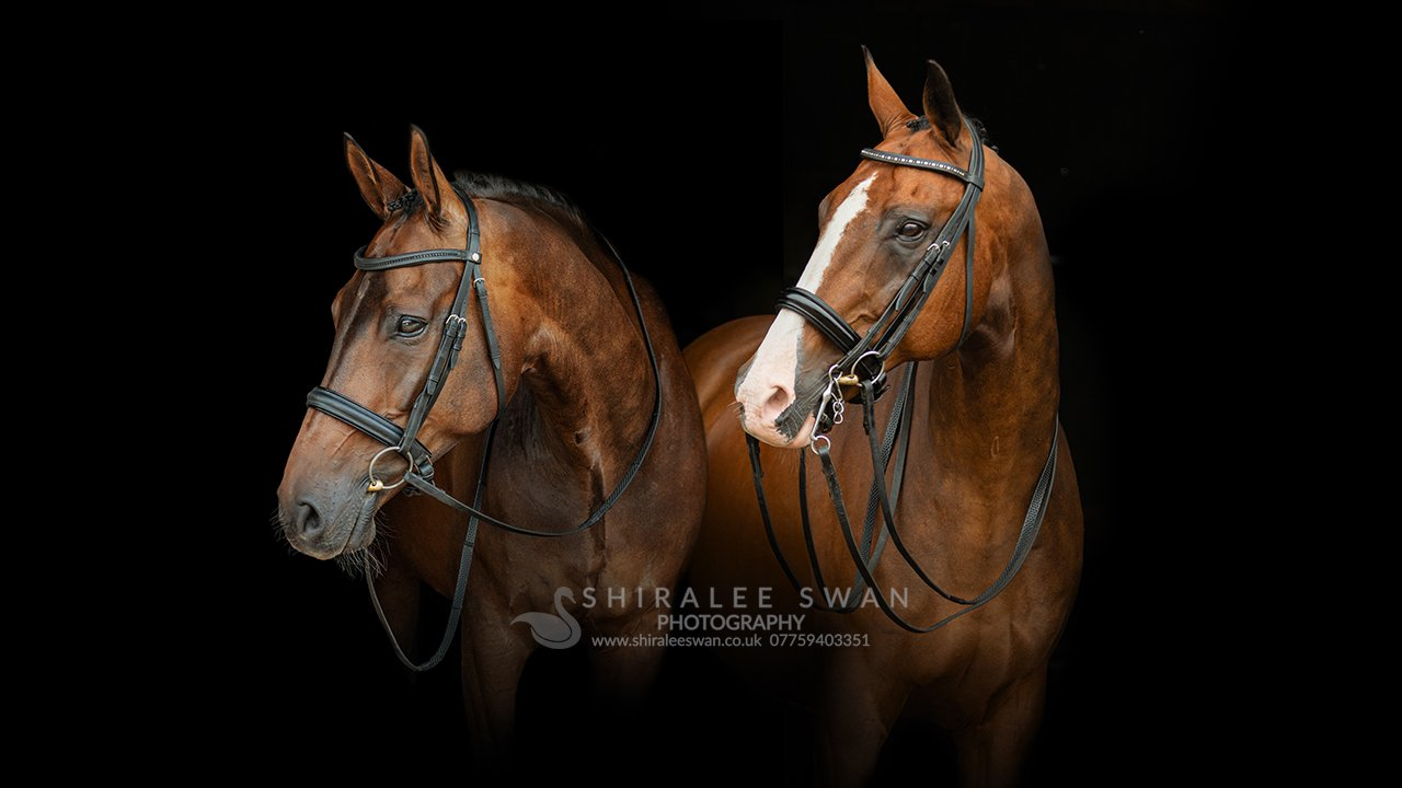 Horse photographer Shiralee Swan