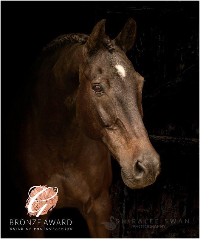 Award winning horse photography by photographer Shiralee Swan