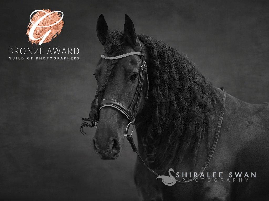 Award winning equine photograph