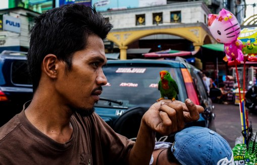 Intelligence without ambition is a bird without wings. -Salvador Dali Unfortunately the man caged the little one shortly after. Manila. 19th January 2016