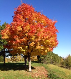 Gorgeous colors -- the rhythms of nature in this season