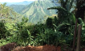 The flora is as spectacular as the fauna in the Sierra Maestra mountains.