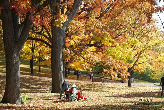 Autumn at High Park, Toronto