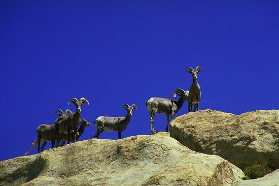 Animals in Joshua Tree National Park, California, USA