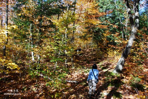 在 Gatineau Park 内徒步和赏秋叶 (加拿大渥太华, Ottawa Canada