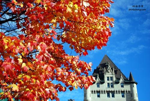 在加拿大渥太华看红枫叶