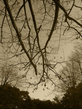 autumn01_500px