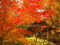 六義園の紅葉の見ごろはいつですか?実はライトアップもオススメ!