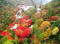 六甲山の紅葉の見ごろはいつですか?駐車場情報、裏道情報あり!