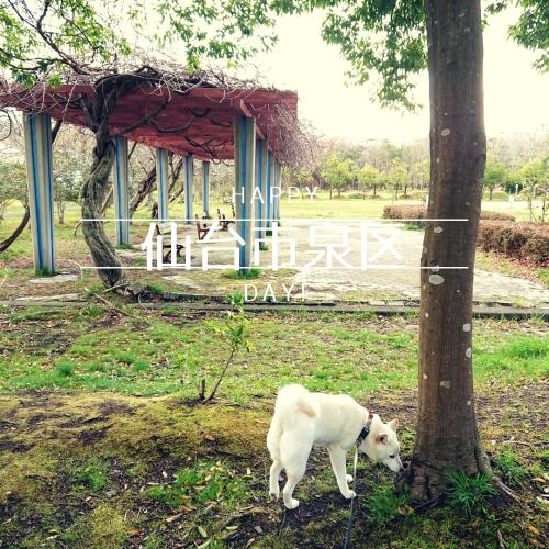 仙台犬散歩