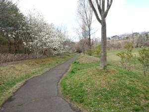 南中山公園の道沿いにある木の花