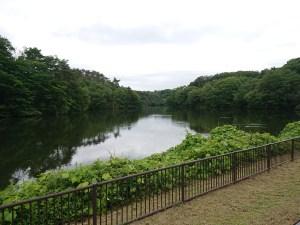 水の森公園の池
