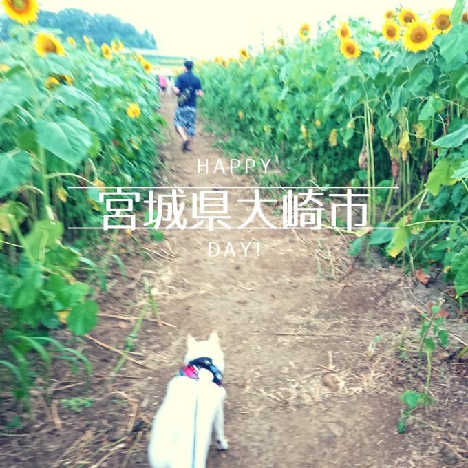 幸せな黄色いひまわり【三本木ひまわりの丘】
