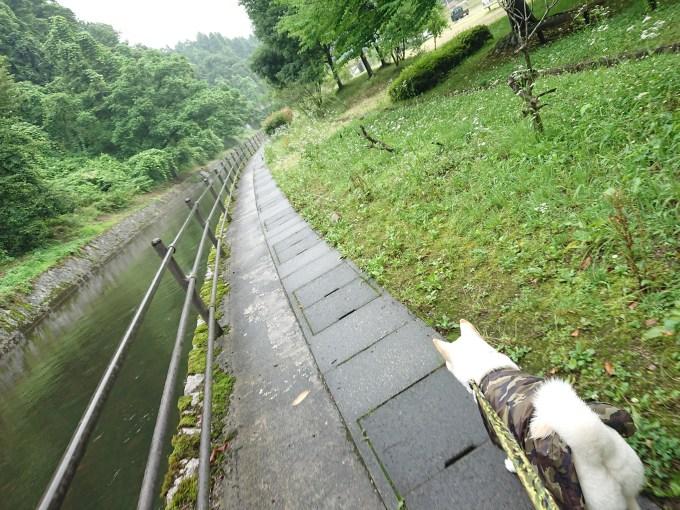 内川沿いの小道