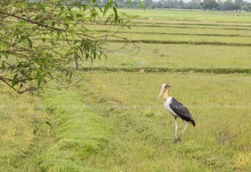 with close proximity to koshi tappu wildlife reserve, lots of birds are found at rajbiraj.